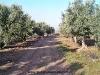 queilesaventura-ruta-quad-navarra0008bardenas_24_02